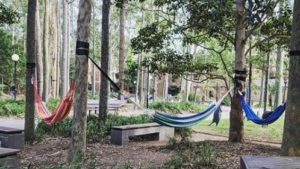 UOW hammock