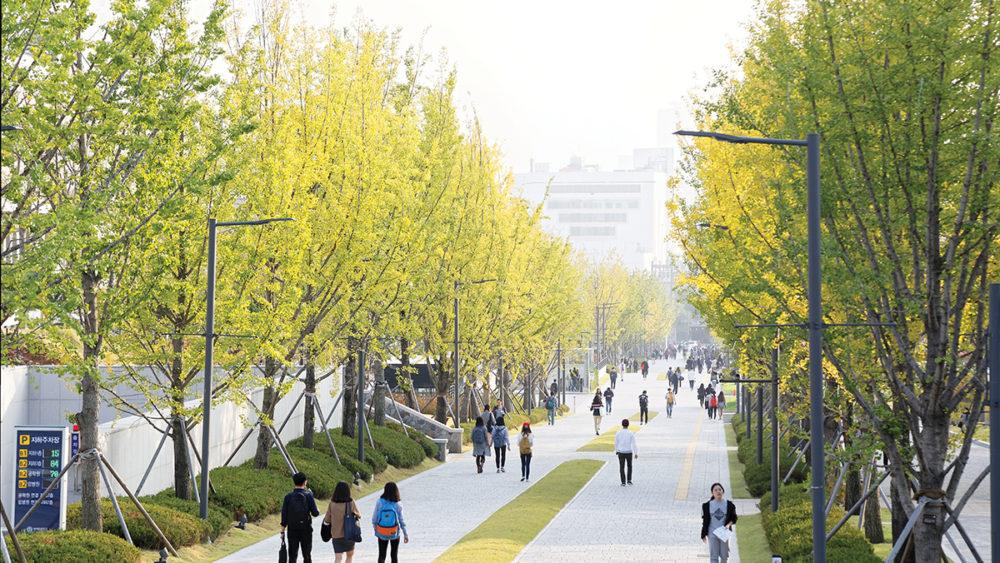 Yonsei Campus Summer