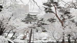 Yonsei Campus Winter